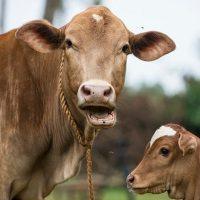 La Comisión de Medio Ambiente del Parlamento Europeo vota a favor de la agricultura ecológica