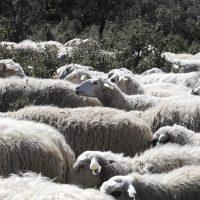 7.000 cabezas de ganado contra los incendios forestales