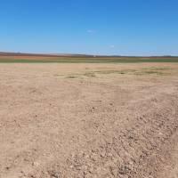 Miles de hectáreas de cereales pueden verse afectadas por la sequía en la región
