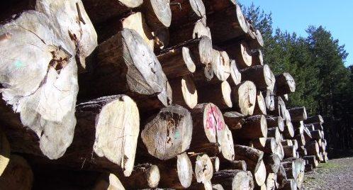 Troncos de árboles extraídos de los bosques de Valsaín.