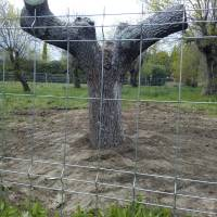 El Ayuntamiento de Guadarrama permitirá la tala de 60 árboles para la construcción de una residencia