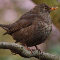 Las aves de barrio sufren los primeros calores estivales, pero podemos ayudarlas a hidratarse