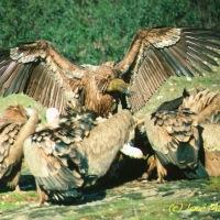 'Fauna fantasma': los 'basureros' de la naturaleza (I)