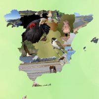 SEO/BirdLife presenta 200 medidas para frenar la pérdida de biodiversidad