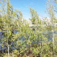 La senda botánica de la laguna del Campillo