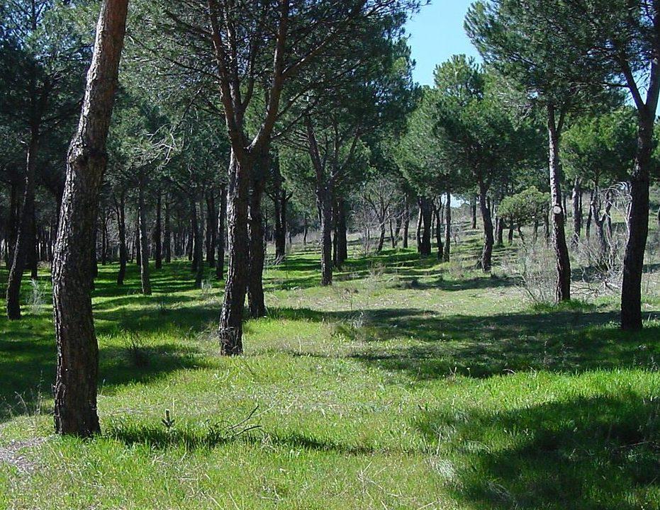 parque_de_las_presillas_3-e1572515560173