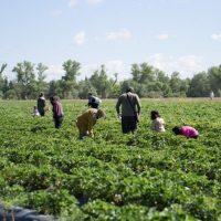 Alimentos sanos, sostenibles y de proximidad para fomentar el empleo juvenil en la Red Natura 2000