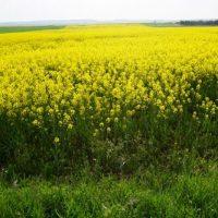 Las medidas de conservación de la PAC deben adaptarse a cada región y paisaje agrícola