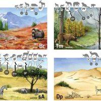 El análisis de las redes tróficas confirma que la actividad humana empobrece la naturaleza
