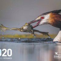 Las belleza de las aves acuáticas inunda los premios de FotoAves 2019