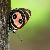 'Pura Biodiversidad', bajo el paraguas de la Cumbre del Clima