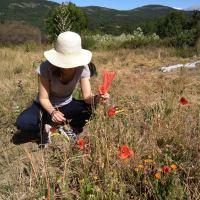 La Comunidad identifica 173 especies silvestres de cultivo en la Sierra del Rincón