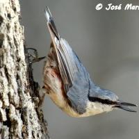 ¿Por qué desaparecen nuestras pequeñas aves? (II)