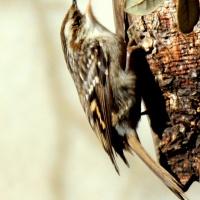 ¿Porque desaparecen nuestras pequeñas aves?