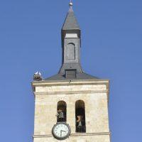 Las cigüeñas vuelven a la torre de la iglesia de Torrejón de Ardoz