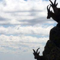 La Policía Local de Manzanares El Real detiene a dos cazadores furtivos en La Pedriza