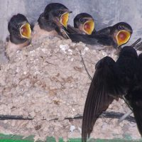Lanzan una campaña para concienciar sobre el daño que causa a las aves la destrucción de sus nidos