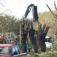 """Una promotora inicia el """"transplante"""" de 65 árboles en una parcela pendiente de dos procesos judiciales"""