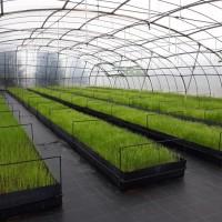 La Comunidad donará a los agricultores 451.000 plantones de variedades hortícolas