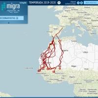 Los aguiluchos cenizos marcados con GPS regresan de África a sus nidos en España