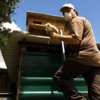 Ayudando a la lechuza común en la Comunidad de Madrid