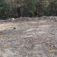 Denuncian los daños causados por el uso de maquinaria pesada en el 'Pinar de los Belgas'