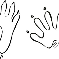 Mapaches madrileños y cómo detectarlos