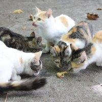 De gatos callejeros y palomas bravías