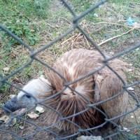 'Ávila Norte', una trampa mortal para la avifauna