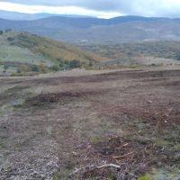 Los pastos de la Sierra del Rincón, amenazados por el desbroce masivo