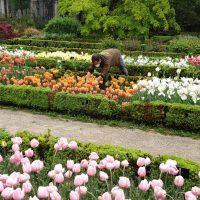 El Real Jardín Botánico realiza la tradicional plantación de bulbos de tulipán y narcisos