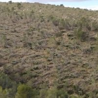 Los ingenieros forestales solicitan que los montes y terrenos forestales afectados por 'Filomena' sean declarados 'Zona de Actuación Urgente'