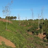 La Comunidad recupera dos zonas verdes en Fuenlabrada para integrarlas en el Arco Verde