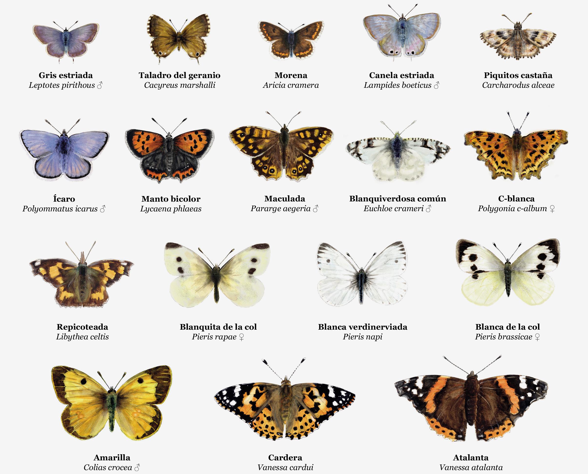 Guía de mariposas del Real Jardín Botánico de Madrid.