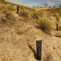 Debemos actuar para limitar la desertificación