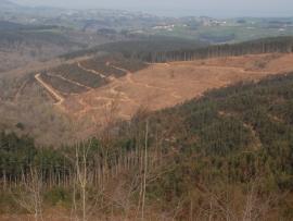 Explotación de eucaliptos en el norte de España ©SEO/BirdLife