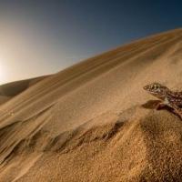 El MNCN presenta la exposición fotográfica 'Vuelta a África: memorias de una biodiversidad perdida'