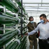 Alcorcón contará con un edificio público que reciclará el aire a través de microalgas