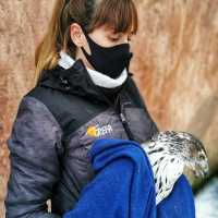 El Equipo de Rescate de GREFA atendió a más de 7.000 animales en doce meses