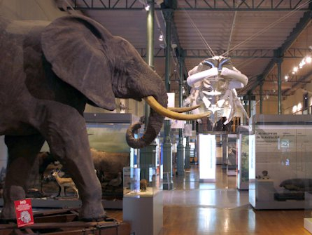 museo_de_ciencias_naturales_4